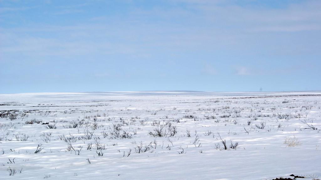 картинки к суровой зиме тундры целовал гладил, гладил