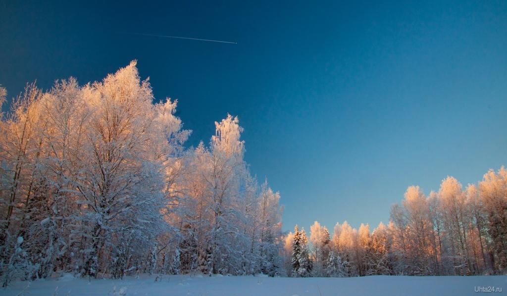 картинки зимний снежный коми лес данной