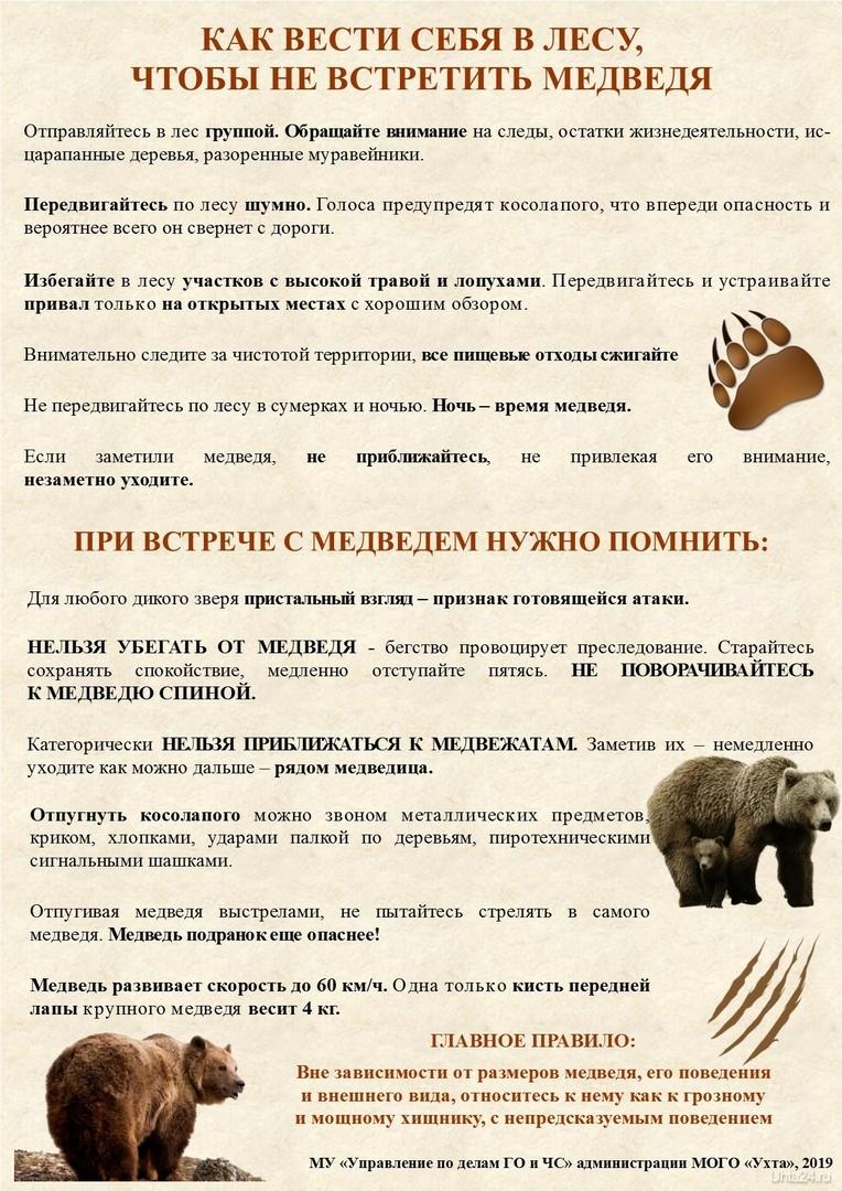 с участившимися случаями выхода медведей к населенным пунктам