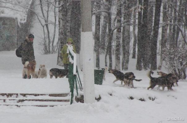 собаки Ухта