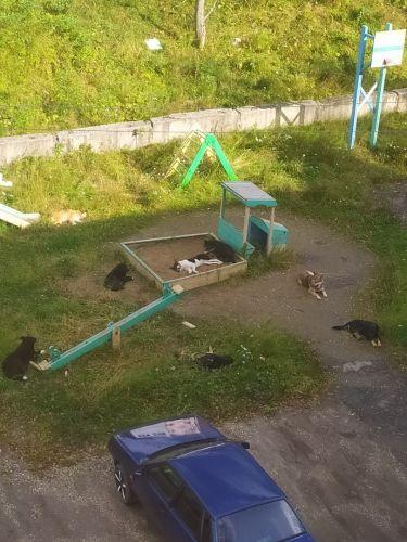 бесхозные собаки на детской площадке